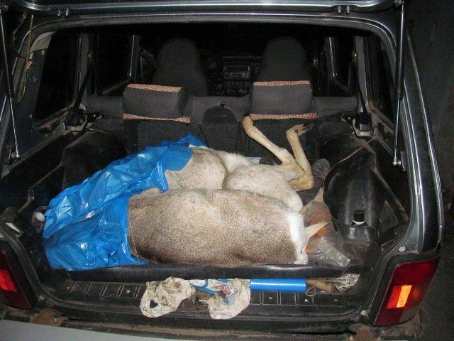 В Башкирии задержаны браконьеры, застрелившие двух косуль