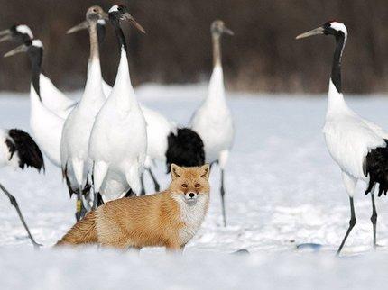 В Башкирии запретили охотиться на зайцев и лис